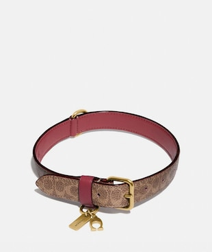 LARGE PET COLLAR IN SIGNATURE CANVAS
